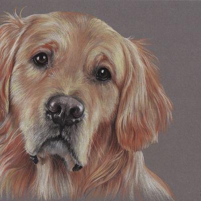 Custom pet portrait Pet painting Dog drawing Animal portrait Golden retriever Dog lovers Original pastel portrait Personalized dog art