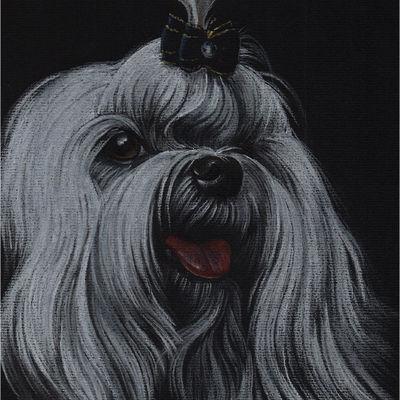 Colorful realistic pet portrait Maltese bichon Pet painting Dog drawing Animal portrait Gift Dog lovers Original pastel portrait Personalized dog art