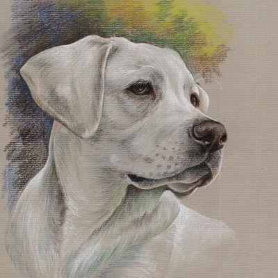 Realistic colorful pet portrait Labrador retriever Pet painting Dog drawing Animal portrait Gift for Dog lovers Original pastel portrait Personalized dog art