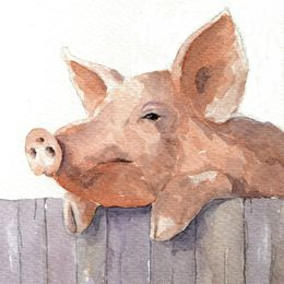 Pig Over a Fence