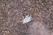 lost glove 18