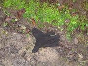 lost glove 19