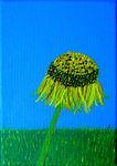 Burton Agnes Sunflower