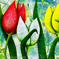 FIVE COLOURFUL TULIPS