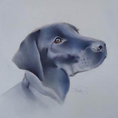 Morgan the Labrador 2  FOR SALE