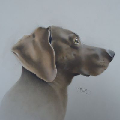 Storm the Weimaraner 4  SOLD  Commissioned work