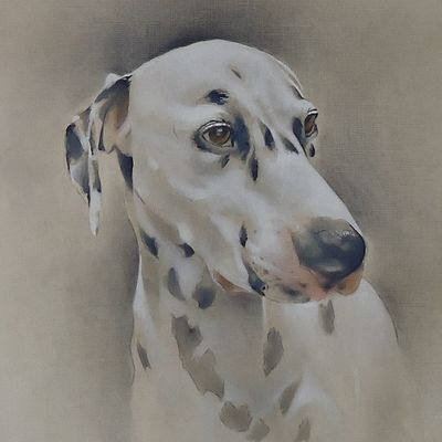 Bailey the Dalmatian  SOLD  Commissioned