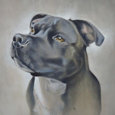 George the Staffie  SOLD  Commissioned