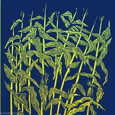 Maize ( Indigo)