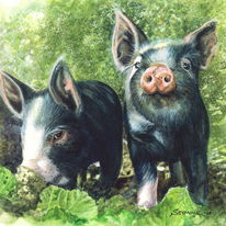 Two Berkshire Piglets