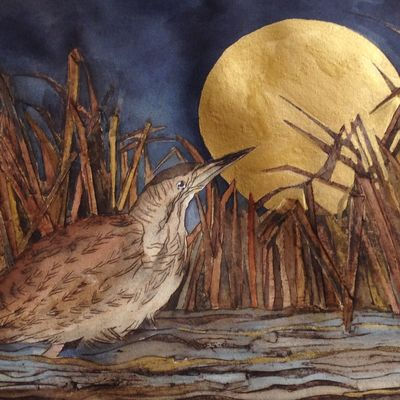 that night of golden moon saw bittern pause to wonder.Minsmere
