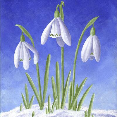 Three Snowdrops in snow