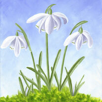 Three snowdrops in moss