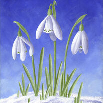 Three Snowdrops in snow