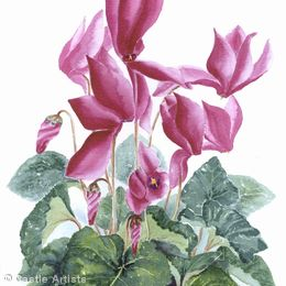Sue Percy Flower