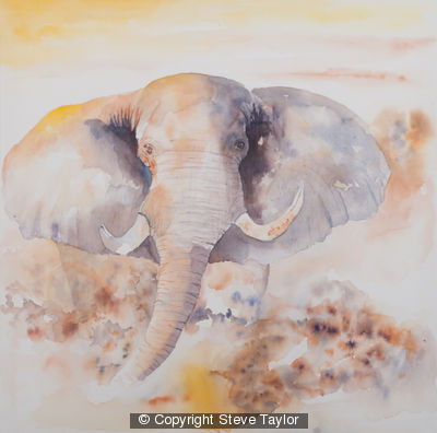 bull-elephant-canvas