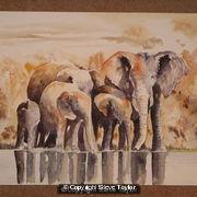 Elephant Group