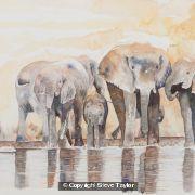 elephant-watering-hole