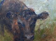 daylesford-gloucester-heifer