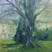 montpellier-gardens-beech