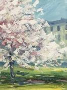 Cheltenham blossom