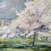 Cherry blossom, London Road