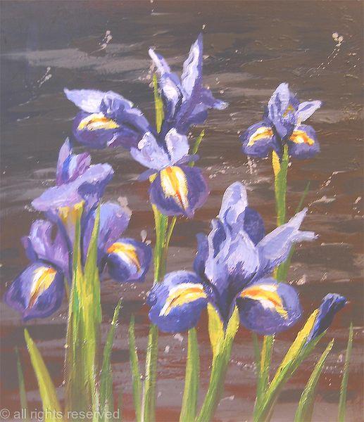 Irises Study