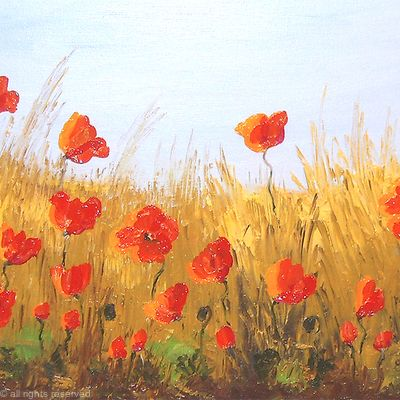 Natural Poppy Field2