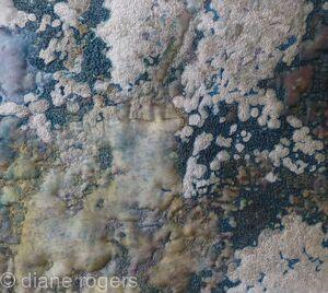 Slindon Lichen