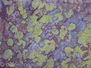 Ullswater Lichen on Stone