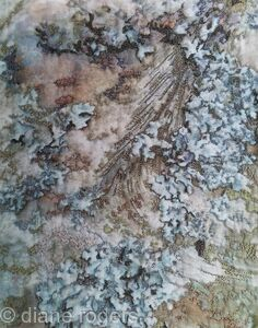 Old Chapel Tree Bark