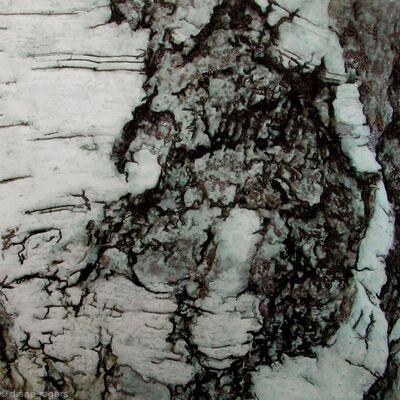silver-bark