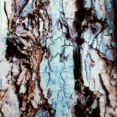 Blue Sequoia