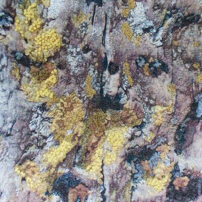 Wood with Lichen