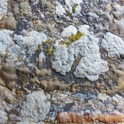Wall with Lichen, Michelham