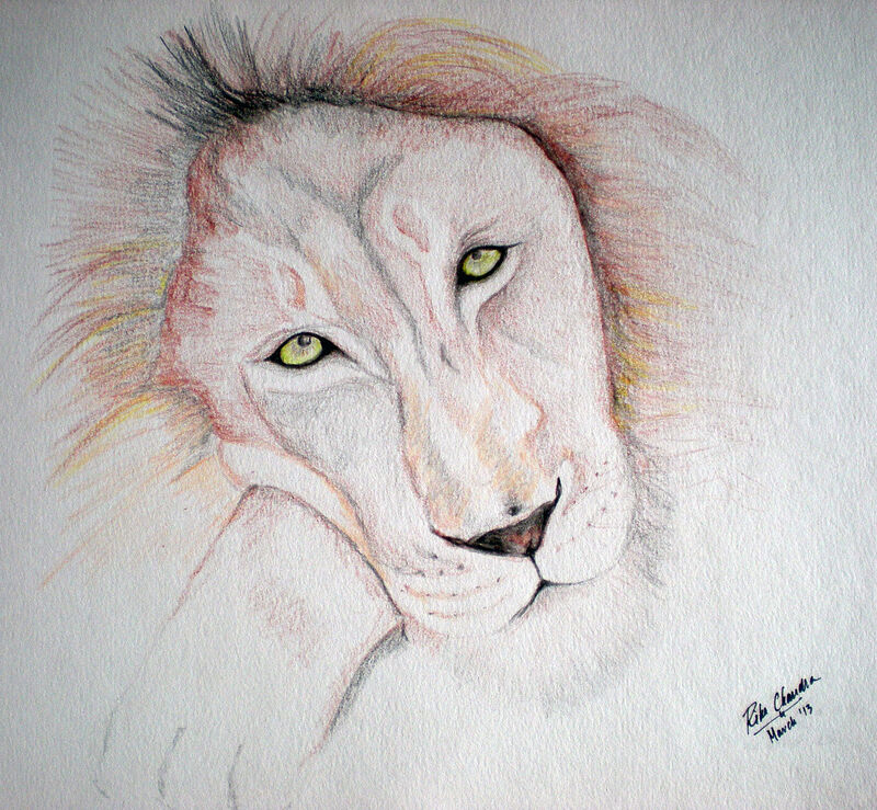 Big Cats Collection - Lion