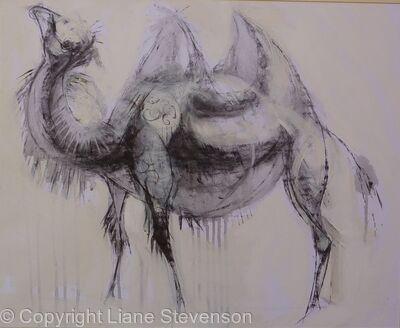 Camel 2 .