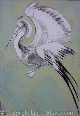 Pelican,blue