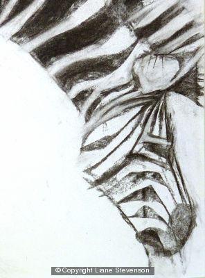 Zebra 2, detail