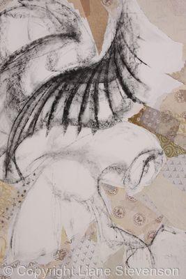 Barn Owl, detail