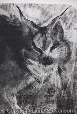 Lynx, detail