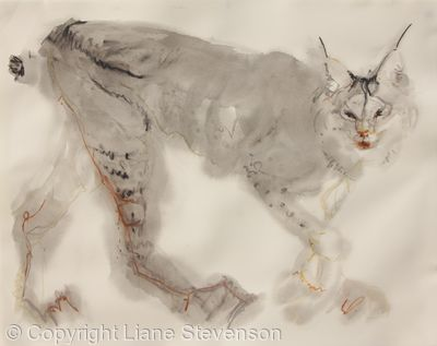 Lynx, soft.