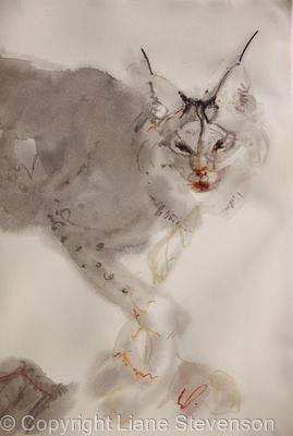 Lynx, soft.detail