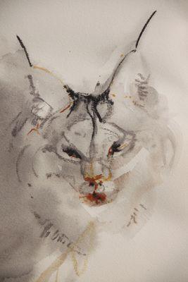 Lynx, soft detail.2.