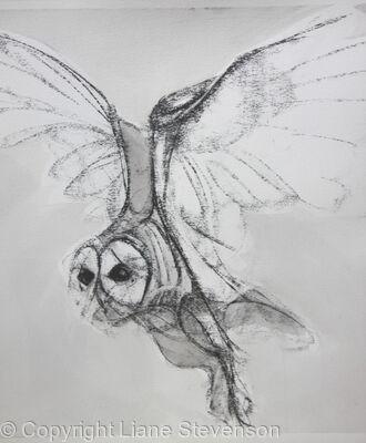Owl, light, detail