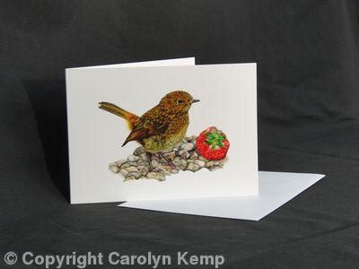 Robin - A Prized Possession