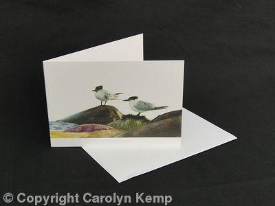 Sandwich Terns - Taking a breather