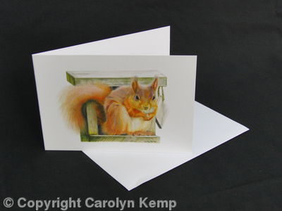 Red Squirrel - Straight at the camera
