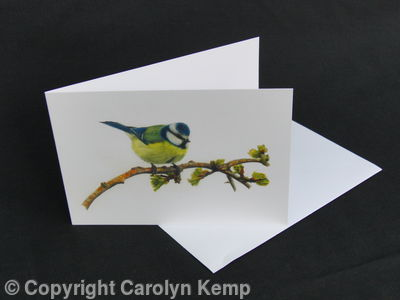 Blue Tit - Feeling Good and Looking Smart