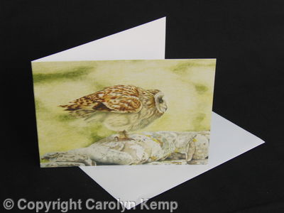 Short Eared Owl - A Great Lauch Pad